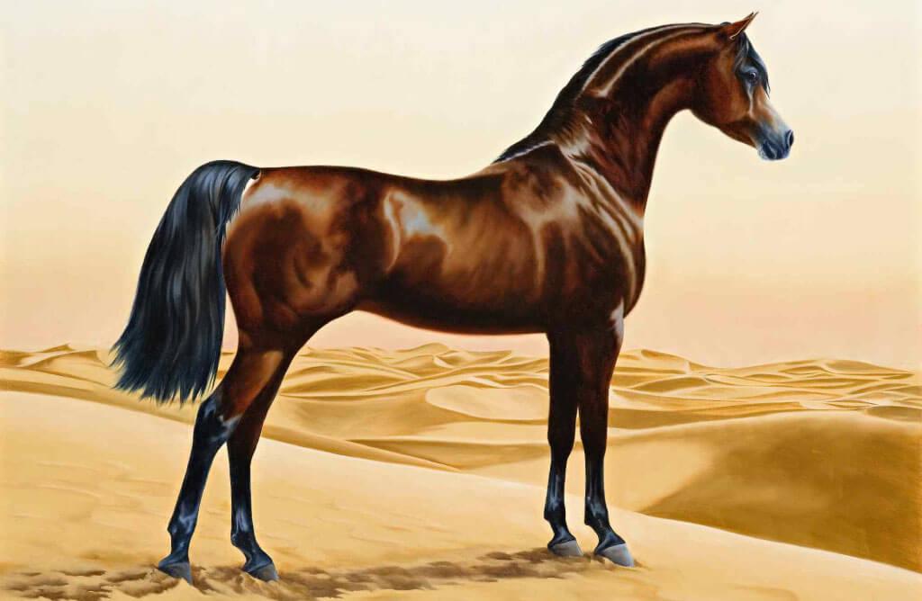 cheval pur sang arabe dans le desert du sahara Muslim Mine